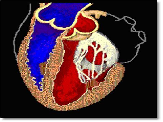 Foto5: Kalp Kapakları